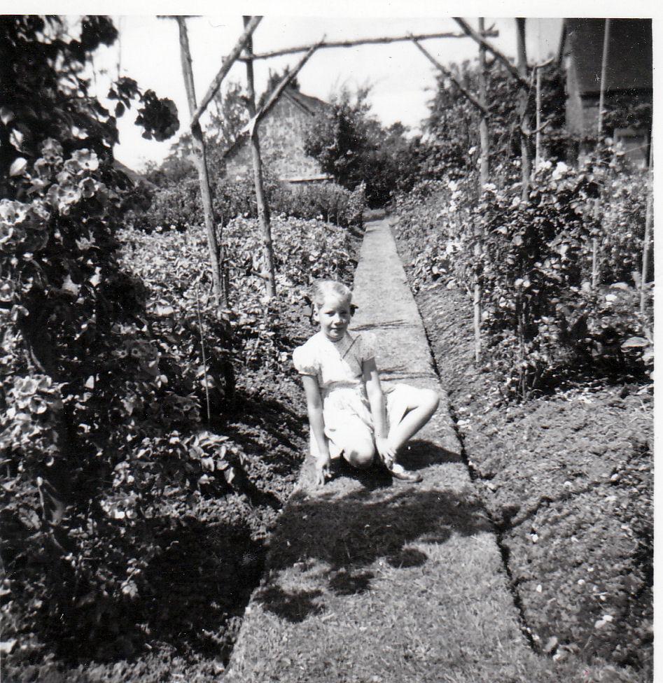 Grandad's garden June 1953